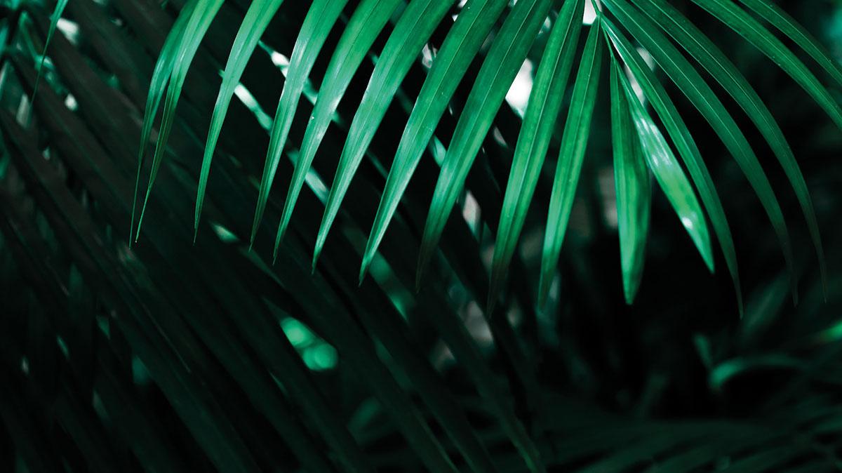 Coconut Life Podcast - Podcast für Führung und Persönlichkeitsentwicklung